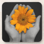 hands cupping sunflower beverage coasters