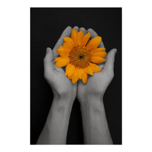 hands cupping sunflower poster