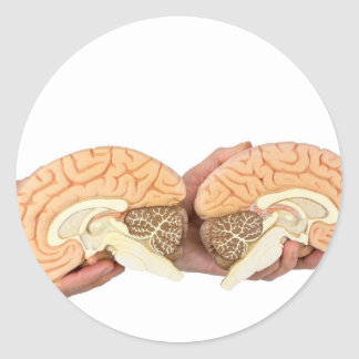 Hands holding model human brain on white classic round sticker