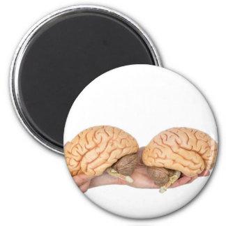 Hands holding model human brain on white magnet