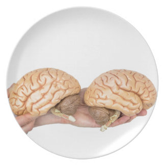 Hands holding model human brain on white plate