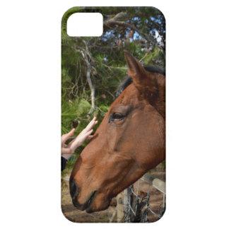 Hands_Patting_Horse, _ iPhone 5 Fundas