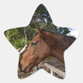 Hands_Patting_Horse, _ Pegatina En Forma De Estrella
