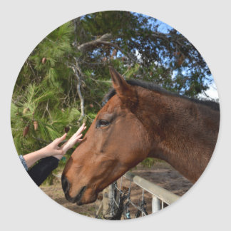 Hands_Patting_Horse, _ Pegatina Redonda