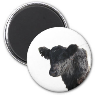 Handsome Belted Galloway Steer 2 Inch Round Magnet