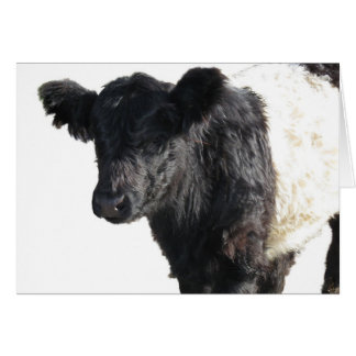 Handsome Belted Galloway Steer Greeting Card