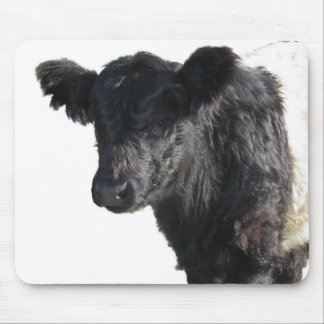 Handsome Belted Galloway Steer Mouse Pad