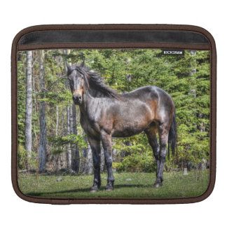 Handsome Black Champion Horse Equine Photo Sleeve For iPads
