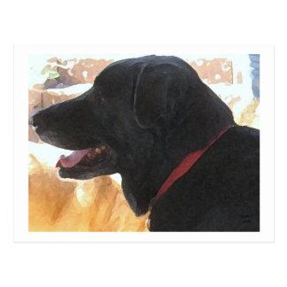 Handsome Black Lab Portrait - Ranch Dog Lover Postcard