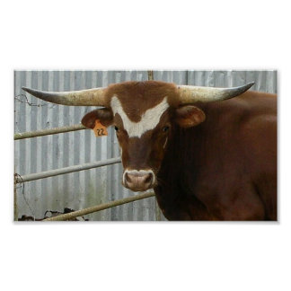 Handsome Bull Canvas Print