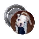 Handsome Bulldog Pinback Button