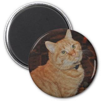 HANDSOME CAT MAGNET