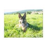Handsome German Shepherd Dog Stretched Canvas Prints