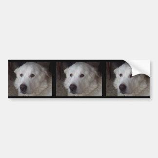 Handsome Great Pyrenees Dog Bumper Sticker