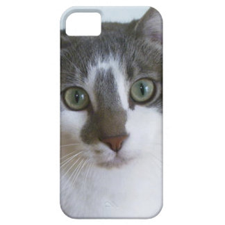 Handsome Grey and White cat iPhone 5 Cases