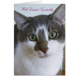 Handsome Grey and White Cat - Pet Sympathy Greeting Card