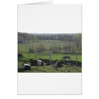 Handsome Herd of Belties Relaxing Card
