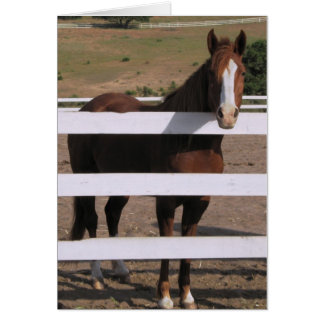 Handsome Horse greeting card