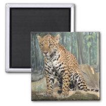 Handsome Jaguar Magnet