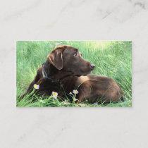 Handsome Labrador Retriever Photograph Animal Care Business Card