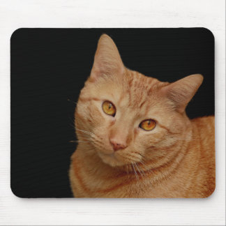 Handsome Marmalade Tiger Cat with Orange Eyes Mouse Pad