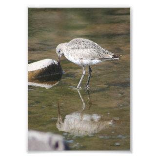 """""""Handsome Me"""" Willet Bird Photo Print"""