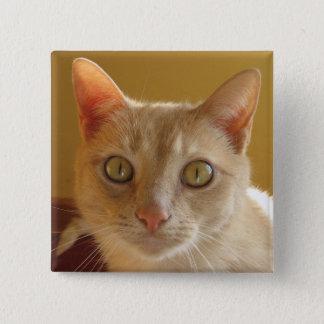 Handsome Orange Cat Pinback Button