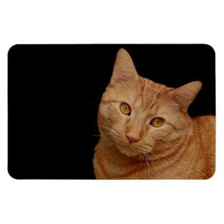 Handsome Orange Tiger Cat Magnet