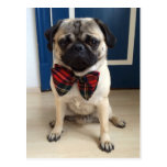 Handsome Pug in a Bow tie design Postcard