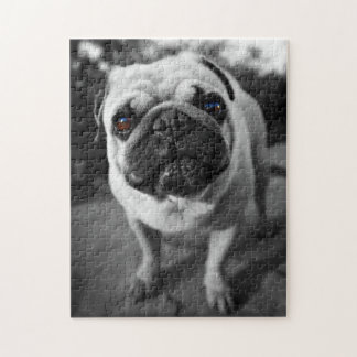 Handsome Pug Jigsaw Puzzle