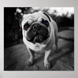 Handsome Pug Poster