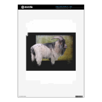 Handsome pygmy goat iPad 2 decal