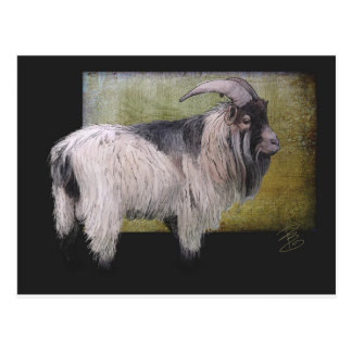 Handsome pygmy goat postcard