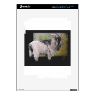 Handsome pygmy goat skins for iPad 3