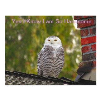 Handsome Snow Owl Postcard