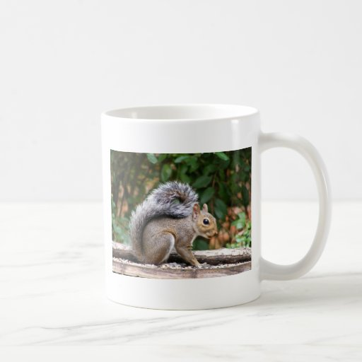 Handsome Squirrel Classic White Coffee Mug