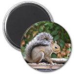 Handsome Squirrel Fridge Magnet