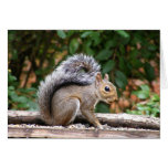 Handsome Squirrel Greeting Card
