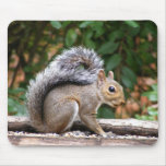 Handsome Squirrel Mouse Pad