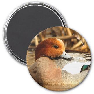 Handsome Stranger in Town Eurasian Wigeon Magnet