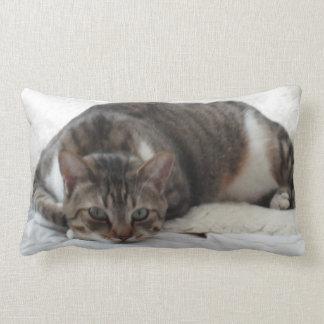 Handsome Tabby Cat Pillow