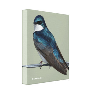 Handsome Tree Swallow: Bird on a Wire Canvas Print