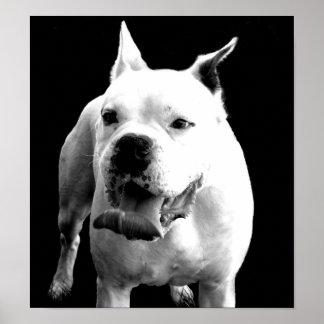 Handsome White Boxer Poster