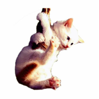 Hang In There Baby Cat Standing Photo Sculpture