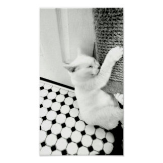 Hang In There Black and White Cat Poster
