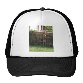 hang in there deer trucker hat
