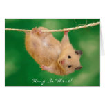 Hang In There! Hamster Cards