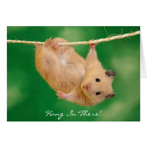 Hang In There! Hamster Greeting Card