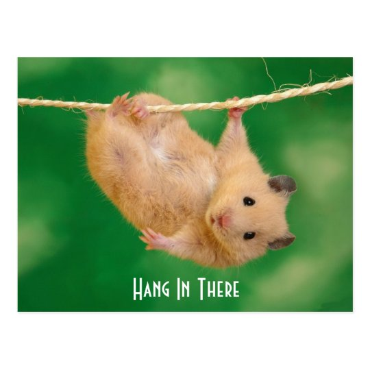 Hang In There Hamster Postcard Zazzle Com