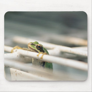 Hang in there! mouse pad